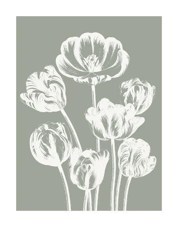 Tulips (Sage & Ivory)