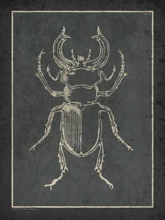 Historia Insectorum Generalis III