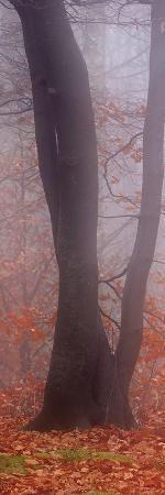 Seasons of Mist - Detail