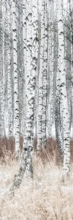 The Silver Forest - Detail
