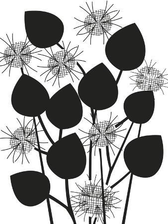 Graphic Nigella