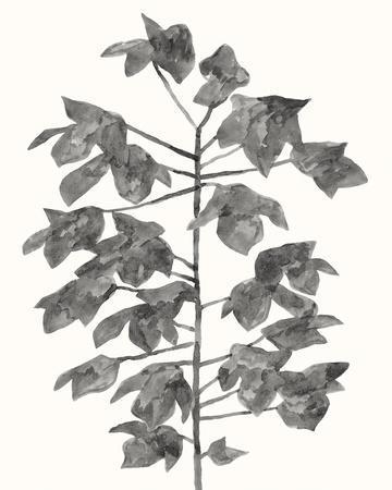 Botanical Lyrical