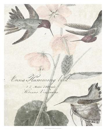 Soft Hummingbirds I