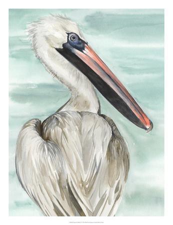Turquoise Pelican I