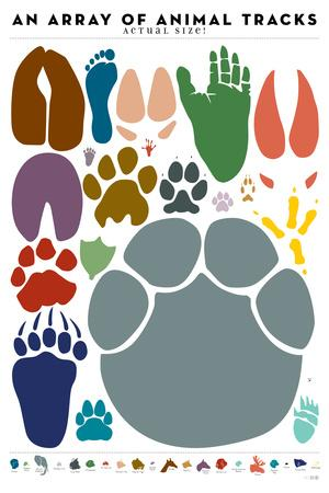 An Array of Animal Tracks
