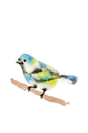 Paintbox Birds - Pure Wish