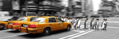 Penguins in New York