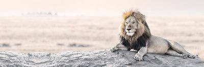 Bright Wildlife - Lion