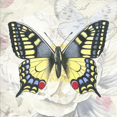 Swallowtail White Peony