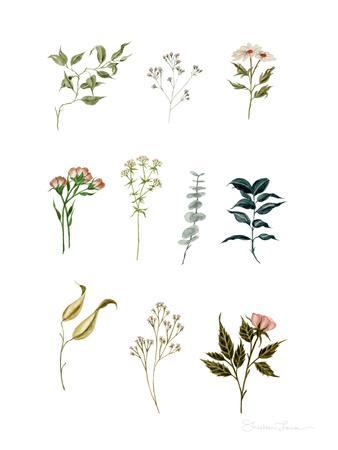 Delicate Botanical Pieces