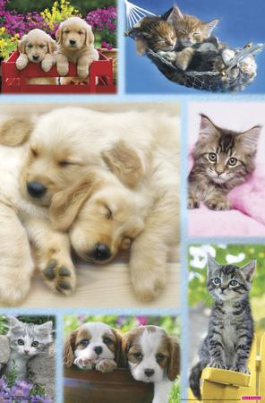 Puppies and Kittens - Collage