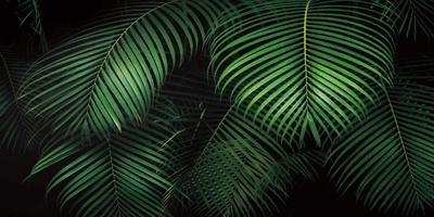 Tropical Canopies