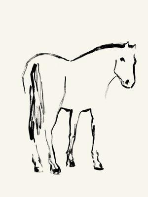 Equus Illustration
