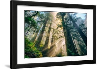 Divine Forest Light Coast Redwoods Del Norte California