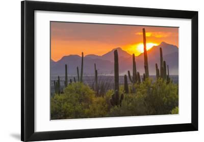 USA  Arizona  Saguaro National Park. Sunset on Desert Landscape