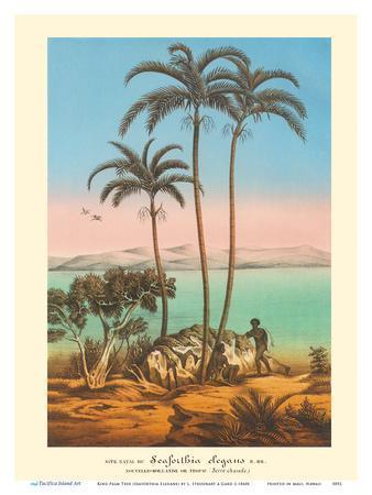 King Palm Tree (Seaforthia Elegans) - Australian Aborigines