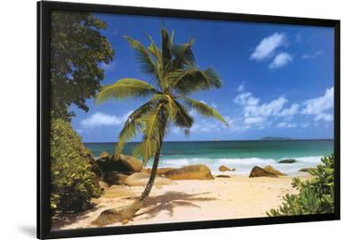 Palm Beach (Tropical Landscape Photo) Art Poster Print