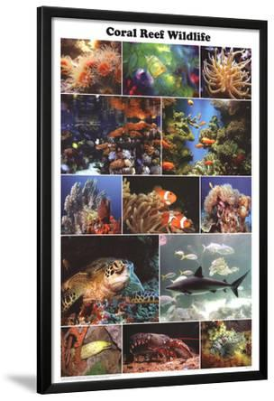 Coral Reef Marine Wildlife Educational Chart Poster