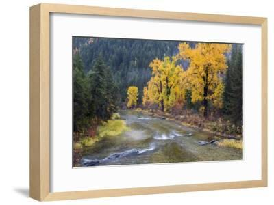 Montana, Mineral County, St. Regis River and trees with golden fall color