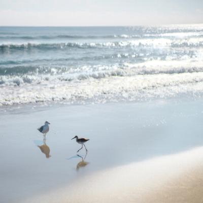 Coastal Retreat - Shores