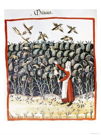 Woman Protecting Her Crop of Millet from the Birds, 13th Century