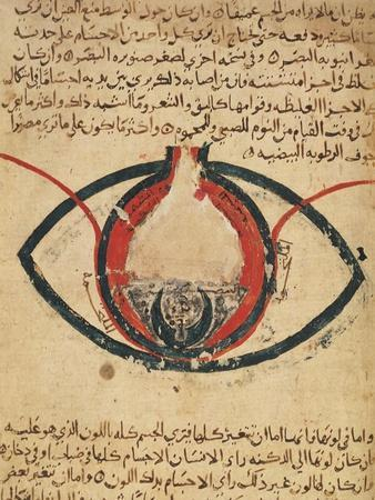Anatomy of the Eye, from a Book on Eye Diseases