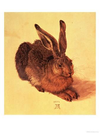 Hare, 1502
