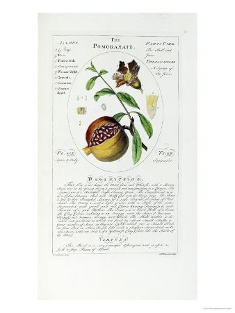 Herbal or Medicinal Plants on the List of the College of Physicians