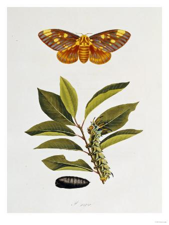 The Natural History of the Rarer Lepidopterous Insects of Georgia 1794