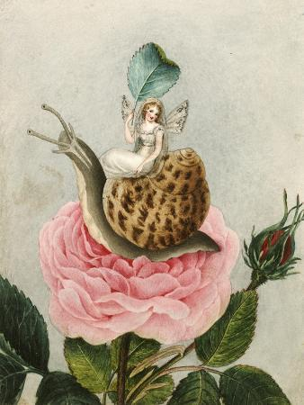 A Fairy Holding a Leaf, Sitting on a Snail Above a Rose