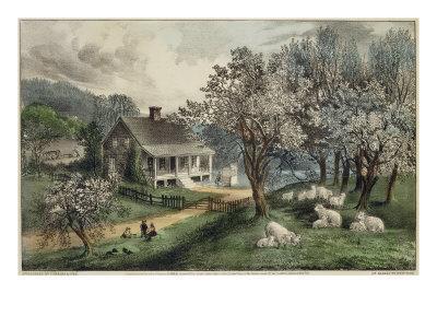 American Homestead Spring