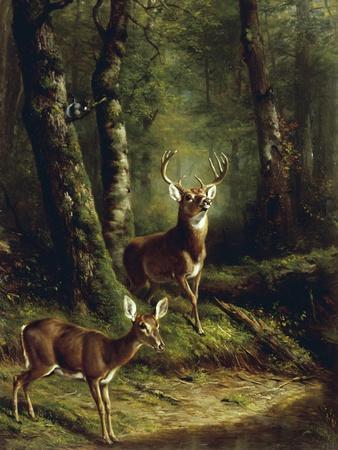 Buck and Doe in the Adirondacks