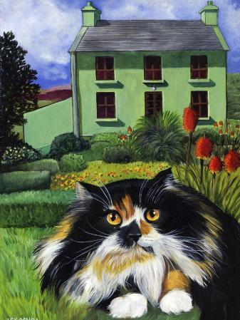 Persian Cat in Ireland (Chat Persan En Irland)