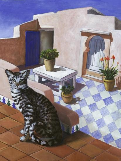 Chat maroc chat marocain
