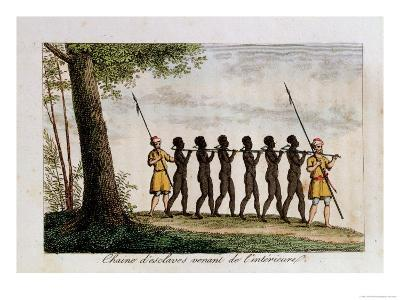 A Group of Slaves, Being Led to the West African Coast by Traders
