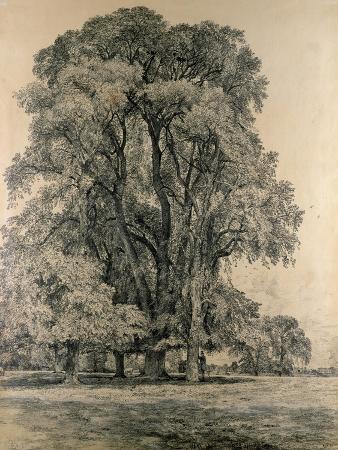 Elm Trees in Old Hall Park, East Bergholt, 1817