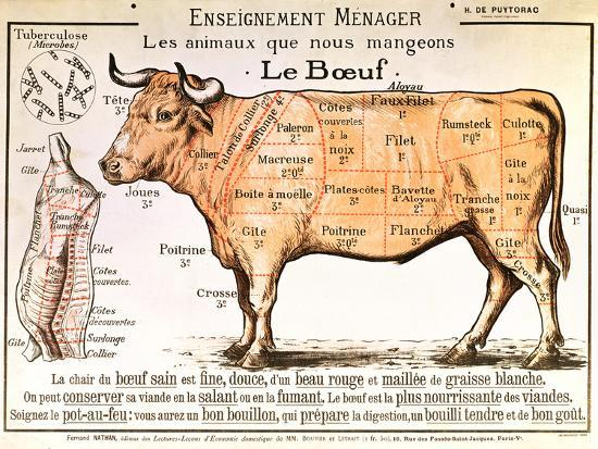 Beef Diagram Depicting The Different Cuts Of Meat Giclee Print At