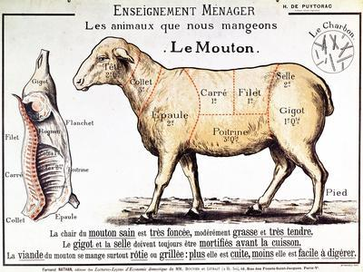 Mutton: Diagram Depicting the Different Cuts of Meat