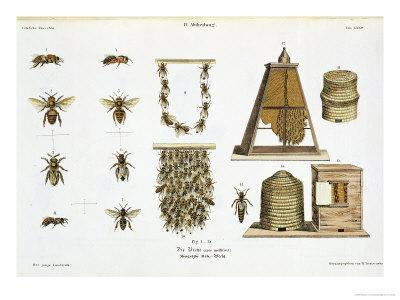 """Bees and Bee-Keeping, from """"The Young Landsman,"""" Published Vienna, 1845"""