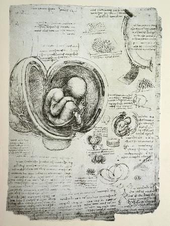 The Human Foetus in the Womb, Facsimile Copy