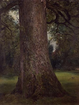 Study of the Trunk of an Elm Tree, circa 1821