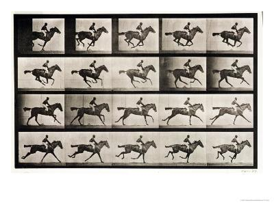 """Jockey on a Galloping Horse, Plate 627 from """"Animal Locomotion,"""" 1887"""