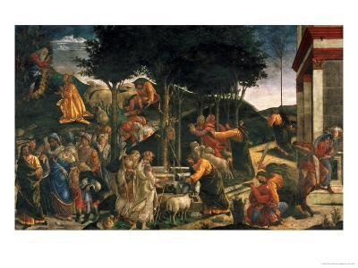The Youth of Moses, in the Sistine Chapel, 1481