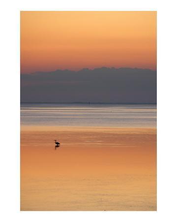Heron fishing at dusk