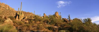 Saguaro Cactus, Sonoran Desert, Arizona, United States