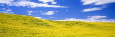 Canola Fields, Washington State, USA