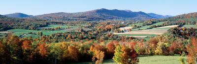 Fall Trees, Danby, Vermont, USA