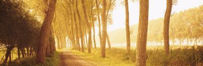 Rural Tree Lined Road, Belgium