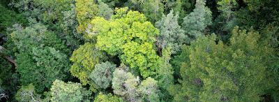 Tahune Forest Reserve, Tasmania, Australia