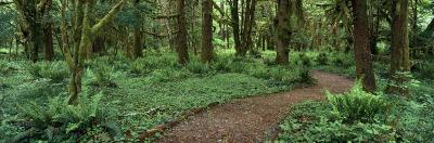 Empty Path in the Rainforest, Olympic National Park, Washington State, USA